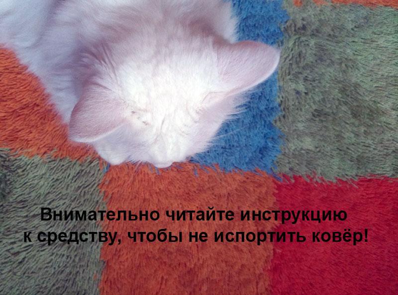 как убрать запах мочи с ковра кошачья кошка фото