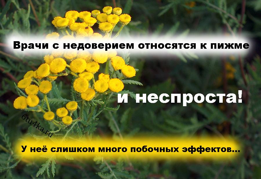 пижма цветки фото