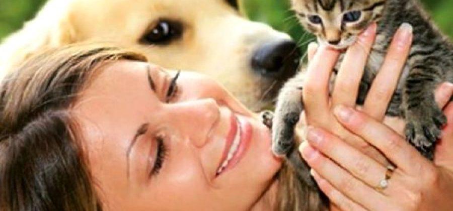 Какое домашнее животное завести?
